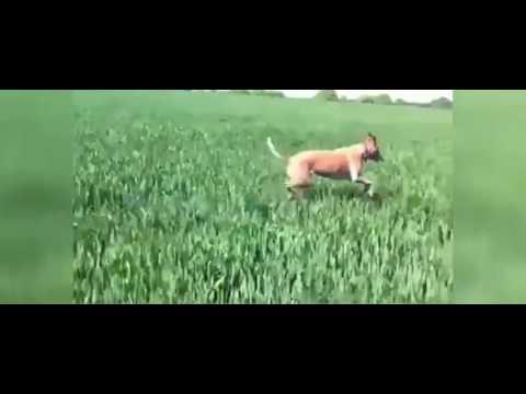 Dog Navigation Technique