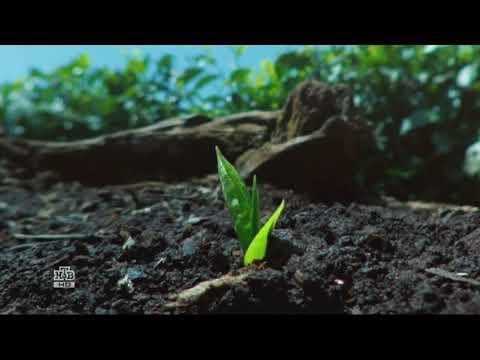 """Чайная фабрика """"Lipton"""" в Кении - рекламный ролик"""