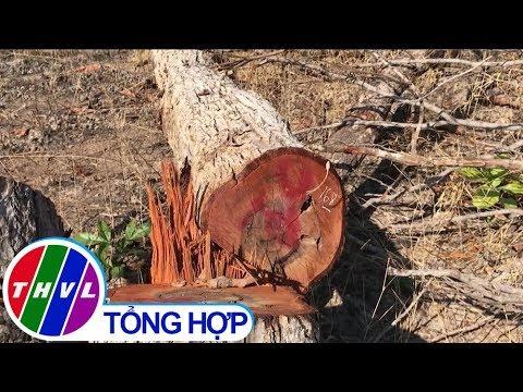 THVL | Hàng chục hecta rừng ở Đắk Lắk bị chặt phá, sang nhượng trái phép