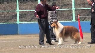 日本コリークラブ創立60周年記念展においてコリー犬グランドチャンピ...