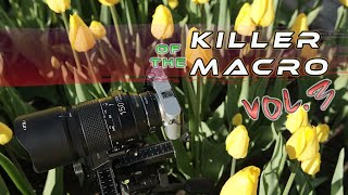 Springtime Macro Photography | Why Macro Is So Exciting