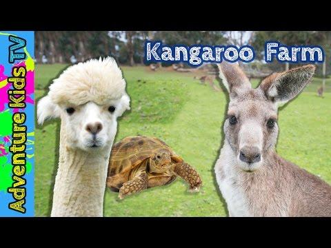 Adventure Kids TV Visit the Outback Kangaroo Farm in Arlington Washington - Kangaroo Petting Zoo
