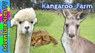 Adventure Kids TV Visit the Outback Kangaroo Farm in Arlington Washington - Kangaroo Petting Zoo