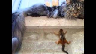 Кошки и котята 5