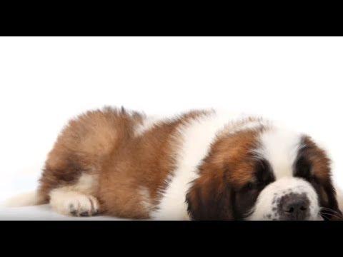 Puppy has allergies