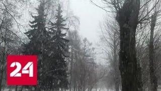 """""""Погода 24"""": снежный циклон вернул зиму на Русскую равнину - Россия 24"""