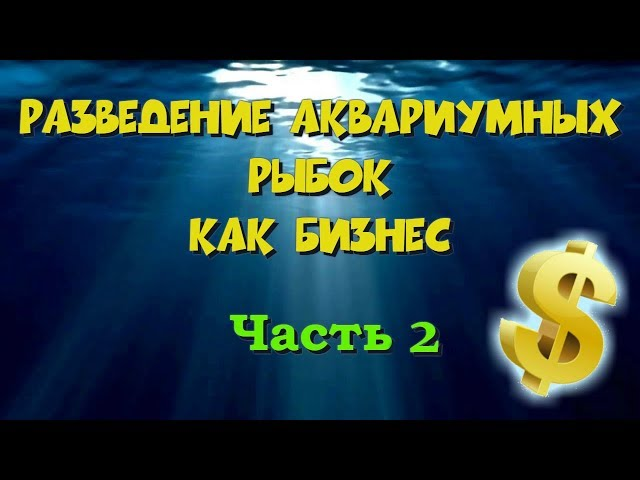 разведение аквариумных рыбок как бизнес 2