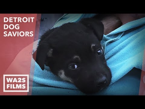 Thumbnail: Hope For Paws in Action as Puppy Acting Strange Saves Mama From Garbage! Ep #4 Detroit Dog Saviors
