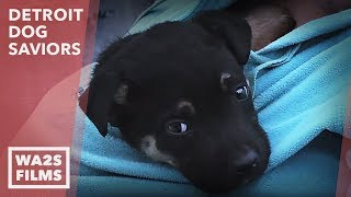 Puppy Acting Strange Helps DAWG Rescue & Save Mama From Garbage - Hope For Dogs | My DoDo