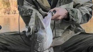 Давно не ловил СТОЛЬКО ЩУКИ - ПРОСТО НА БЛЕСНУ, рыбалка на спиннинг осенью