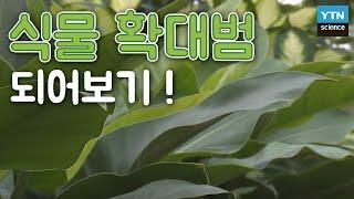 실내 식물을 죽이지 않고 잘 키우는 방법 / YTN 사이언스