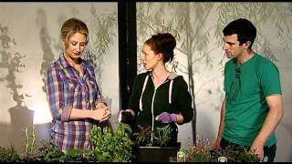Growing Herbs - How To Plant Herbs In A Window Box