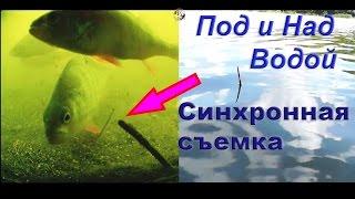 Ловил на летнюю удочку с боковым кивком и поплавочную удочку. съемка с двух камер. Ловля на поплавок(ПОКЛЕВКИ на удочку с боковым кивком и поплавочную удочку. Синхронная съемка под и над водой. Рыбалка.….((Мой..., 2016-05-23T10:45:02.000Z)
