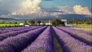 Lost in France / Bonnie Tyler