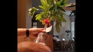 Money Tree in a Box From Amazon Safe travel
