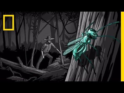 The Sting of Doom | Mindsuckers