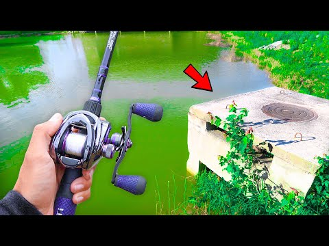 This POND Is LOADED W/ Bass! (Bank Fishing)