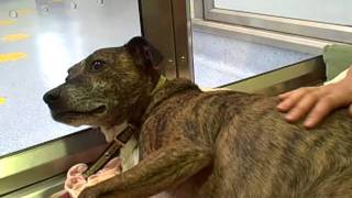 Dogs Trust Leeds: Meet Tye In His Kennel.