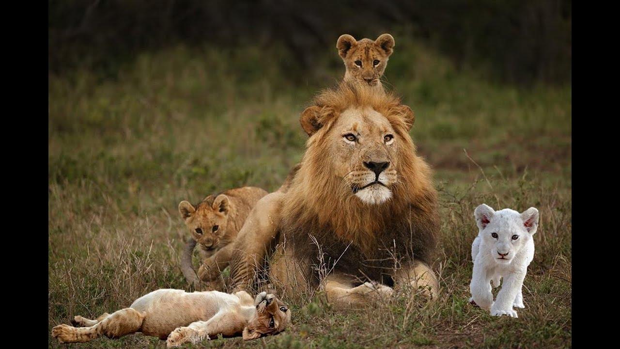 Baby Wild Animals Cute - YouTube