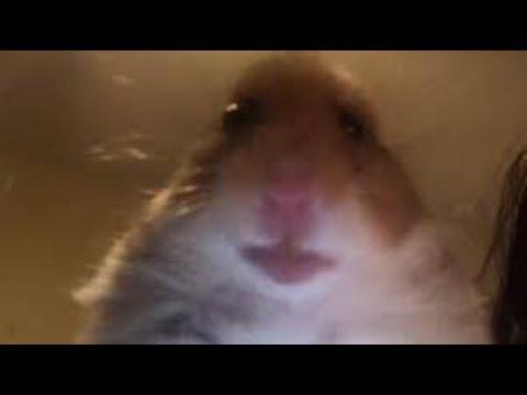 Hamster web cam