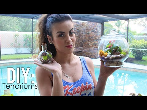 how to make your own ecosphere