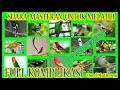 Kompilasi Masteran Gacor Cocok Untuk Melatih Bebagai Jenis Burung Durasi 4 Jam Terbaru 2017 Audio(.mp3 .mp4) Mp3 - Mp4 Download