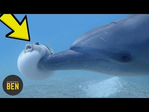 10 Animales Que Fueron Grabados Haciendo Cosas Extrañas