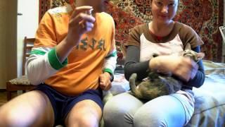 Как сделать укол кошке - видеоинструкция