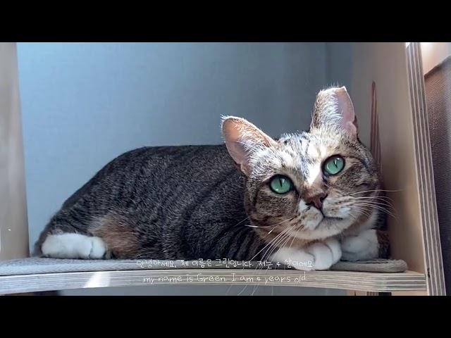 자기이름 알아듣고 대답하는 고양이 🥦💚 A cat who understands his name and answers