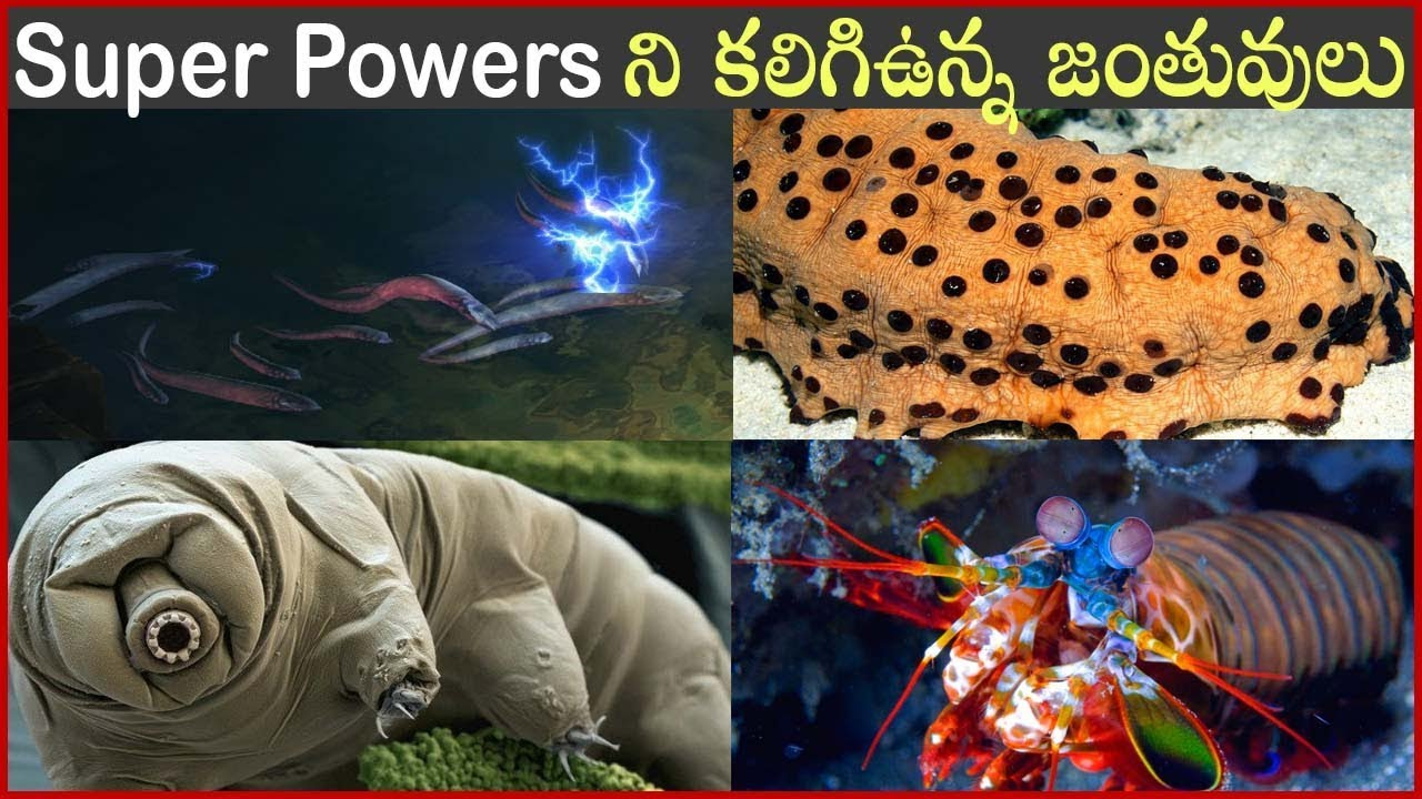 Amazing Animals With Real Super Powers In Telugu | Interesting Facts About Super Powers| Dark Telugu