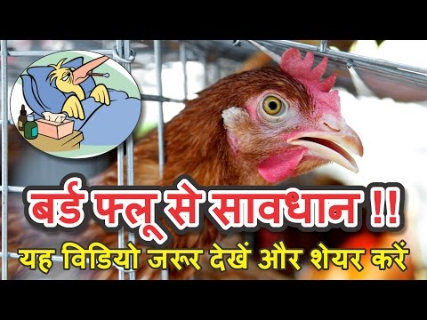 बर्ड फ्लू से सावधान !! ये विडियो हर हिन्दुस्तानी को शेयर करे | Bird Flu Preventing Tips in Hind