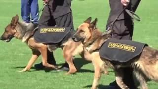 Հանցագործներին  հայտնաբերում են հատուկ վարժեցրած շները. Տեսանյութ