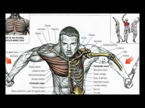 Best Bodybuilding Exercises 1