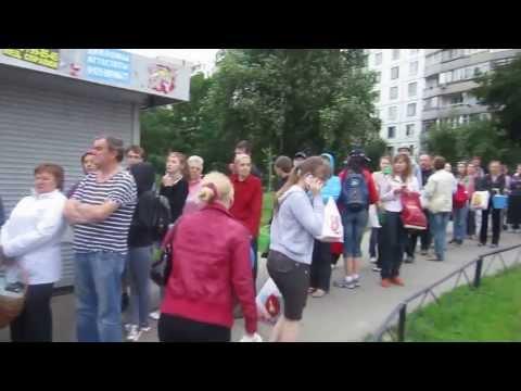 Совхоз имени Ленина: очередь из волонтёров собирать клубнику