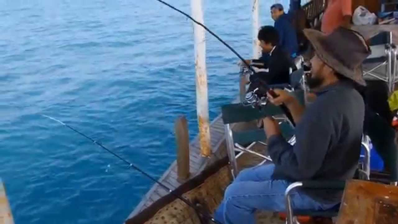 Dhow fishing wakra port 30 nov 2015 youtube for Capt al fishing report