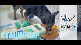 Стационар в ветеринарной клинике
