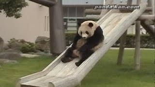 Pandas on the slide 滑り台を滑るパンダ18連発!