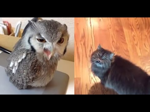 Owl And Cat Video Yas