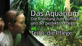 Das Aquarium: Anleitung zum Aufbau und Pflege - Teil 8: die Pflege