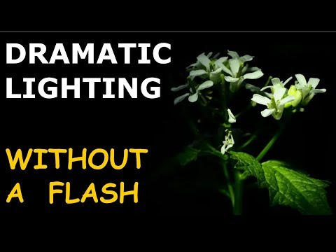 Flower Photography Tips: Dramatic Light without Flash and Macro ep.153