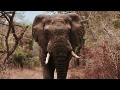 elephant du web - Guide de l'éléphant du web