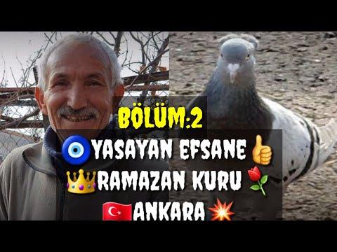 Видео: YAŞAYAN EFSANE RAMAZAN KURU GUVERCIN OYUN KUŞU TOP 10 PIGEONS পায়রা PALOMAS कबूतर الحمام 鴿子 ハト