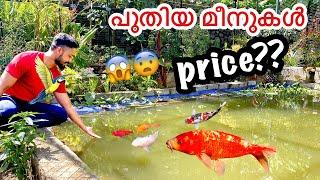 1,65,000/- രൂപയുടെ കുളത്തിൽ പുതിയ മീനുകൾ  | Buying Varieties  Koi Fishes | Biggest Purchase