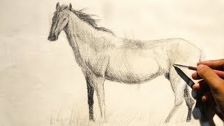 How to draw a Horse step by step   Horse Sketch Using Pencil    Horse Speed Drawing
