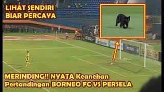 Mustahil Kucing Ini Menjaga Gawang Persela Lamongan Saat Hadapi Tuan Rumah Borneo FC