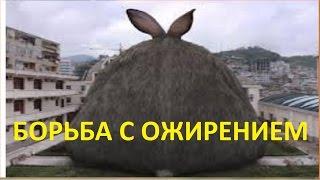 Ожирение кроликов.