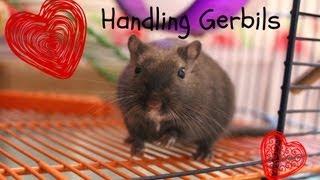 Handling Gerbils