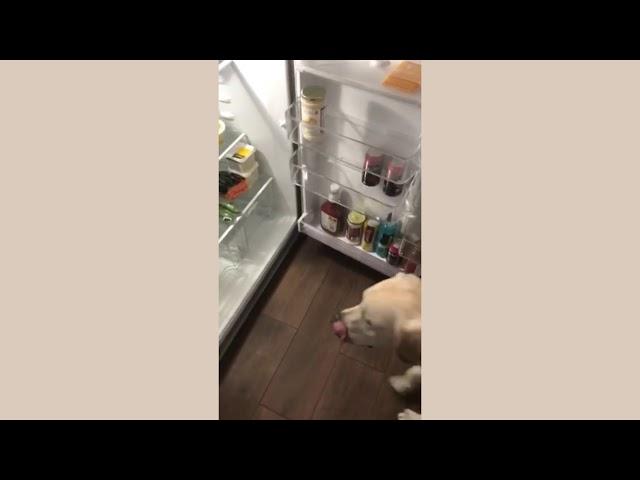 Almond Opening Fridge - Aspen Service Dogs