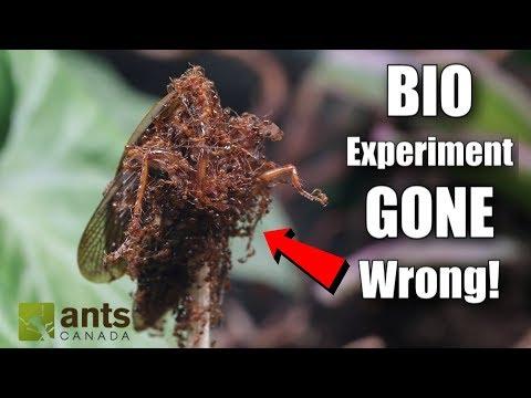 My Failed Biological Experiment