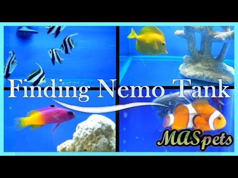 Building a 'Finding Nemo' or Finding Dory Fish Tank | PetHelpful